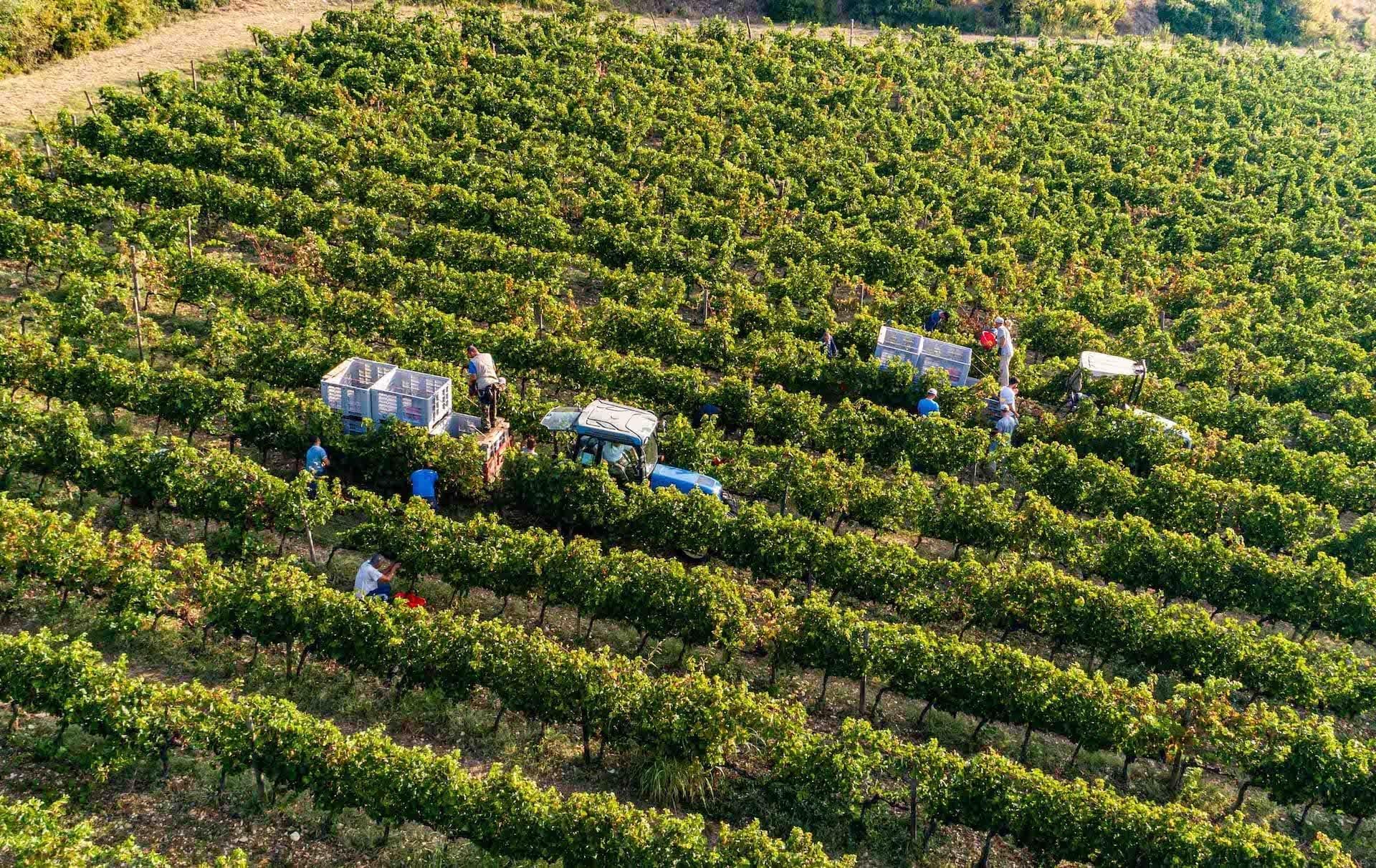 https://principecorsini.s3.eu-central-1.amazonaws.com/wp-content/uploads/2020/02/07165648/Fico-Wine-Principe-Corsini-18.jpg