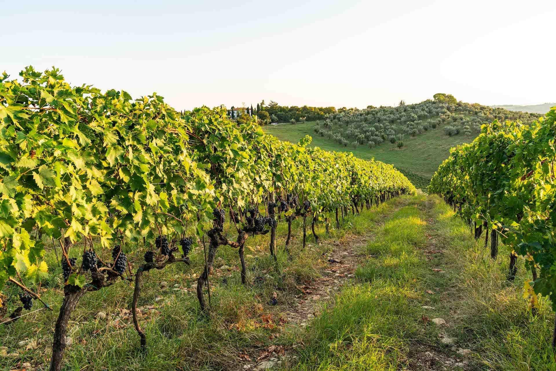 https://principecorsini.s3.eu-central-1.amazonaws.com/wp-content/uploads/2020/02/07165717/Fico-Wine-Principe-Corsini-15.jpg